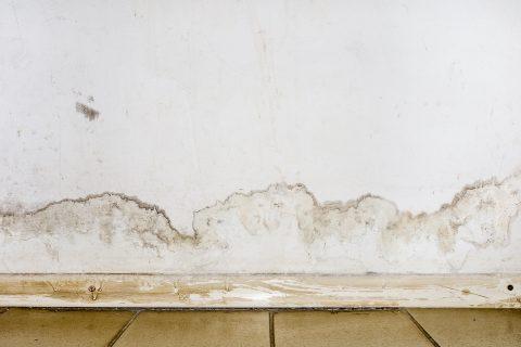 Mur blanc avec tâches d'humidité suite à un dégât des eaux